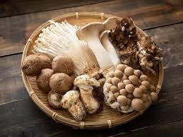maggie mushrooms
